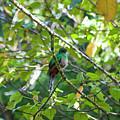 Female Quetzal by Wes Hanson