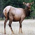 Feme Elk by Tiffany Vest