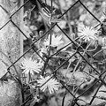 Fence And Flowers. by Gary Gillette