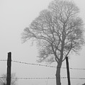 Fence And Fog by Philip Openshaw