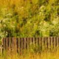 Fence And Hillside Of Wildflowers On Suomenlinna Island In Finland by Greg Matchick