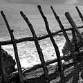 Fence by Gaspar Avila