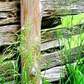 Fence by Ian  MacDonald
