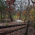Fence In The Forrest by Larry Braun
