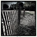 Fence by Judith Kitzes