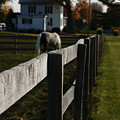 Fence Line by Linda Shafer