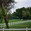 Fence On The Wooded Green by Frank J Casella