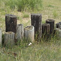 Fence Post All In A Row by Erick Schmidt
