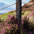Fence Post In The Peak District by Tim Clark