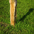 Fence Post by Jon Burch Photography