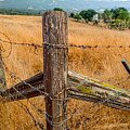 Fence Posts by Derek Dean