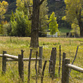 Fence Posts by Gary Benson