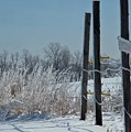 Fence Posts In Ice by Martie DAndrea