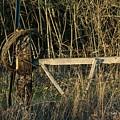 Fence Row by Delton Maddox