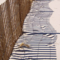 Fence Shadow by Iris Posner