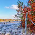 Fenced Autumn by Dmytro Korol