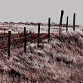 Fenceline by Darcy Dietrich