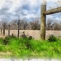 Fenceline by Paulette B Wright