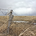 Fencepost by Linda Bianic
