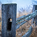 Fences by Alvin Sangma