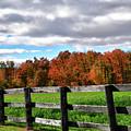 Fences, Fields And Foliage by Maria Keady