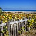 Fences On The Dunes by Debra and Dave Vanderlaan
