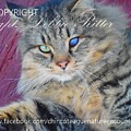 Feral Kitty Poster Child by Captain Debbie Ritter