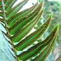 Fern Art Print Green Forest Ferns Baslee Troutman by Baslee Troutman