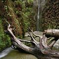 Fern Canyon Creek by Travis Elder
