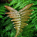 Fern by Chrystal Mimbs