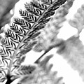 Fern Crush Vertical Cut In Black And White by Angela Rath