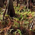 Fern Forest Floor by Carol Groenen