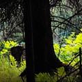 Fern Forest by Lori Mahaffey