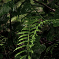 Fern Green by Gary Richards