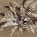Fern In Sepia by Julia Khoroshikh