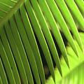 Fern Leaf by Carole Irving