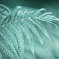 Fern Leaves Abstract 1. Nature In Alien Skin by Jenny Rainbow