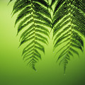 Fern On Green by Ron Dahlquist - Printscapes