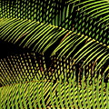 Fern-palm Abtract by Bonnie See