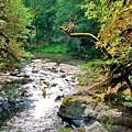Fern River Oregon by Val Conrad