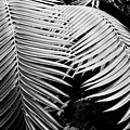 Fern Room Cycads by Kyle Hanson