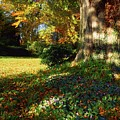 Fernhill Gardens, Co Dublin, Ireland by The Irish Image Collection