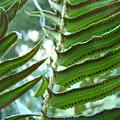 Ferns Art Prints Green Forest Fern Sunlit Giclee Baslee Troutman by Baslee Troutman