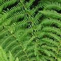 Ferns Au Naturale by Suzanne Gaff