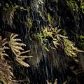 Ferns Below Falls By Jean Noren by Jean Noren