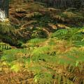 Ferns by Ignacio Leal Orozco