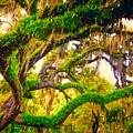 Ferns On Florida Oaks by Peter Hogg