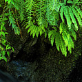 Ferns On The Wall by Robert Potts