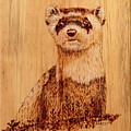 Ferret by Ron Haist