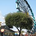 Ferris Upside Down by Kelly Mezzapelle